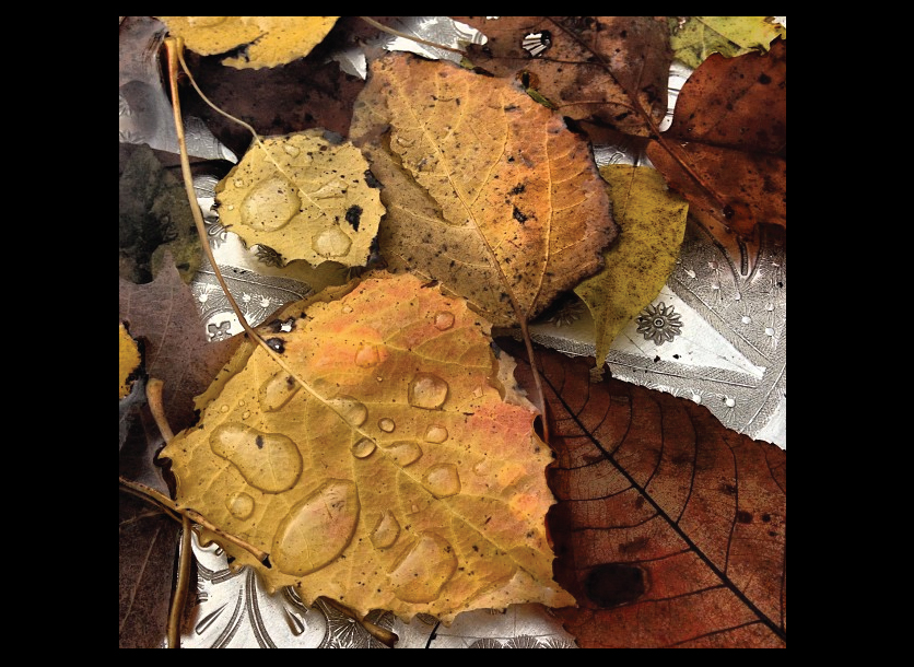 wet-leaves