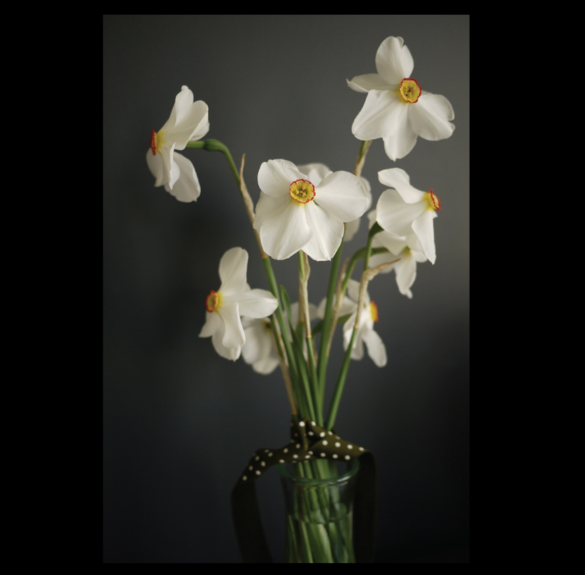 pheasant-eye-narcissus