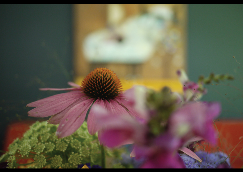 Coneflowers-from-the-Garden