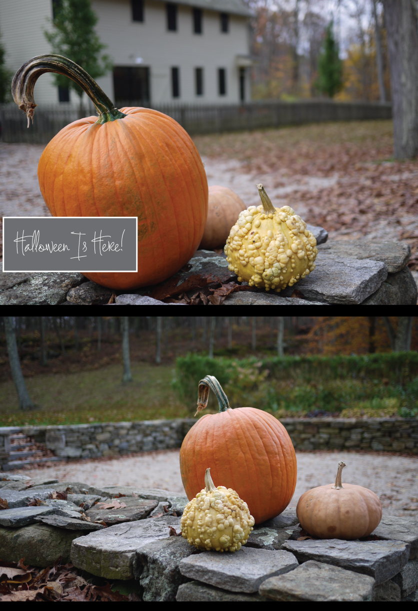 Pumpkins-on-the-Rock-Wall