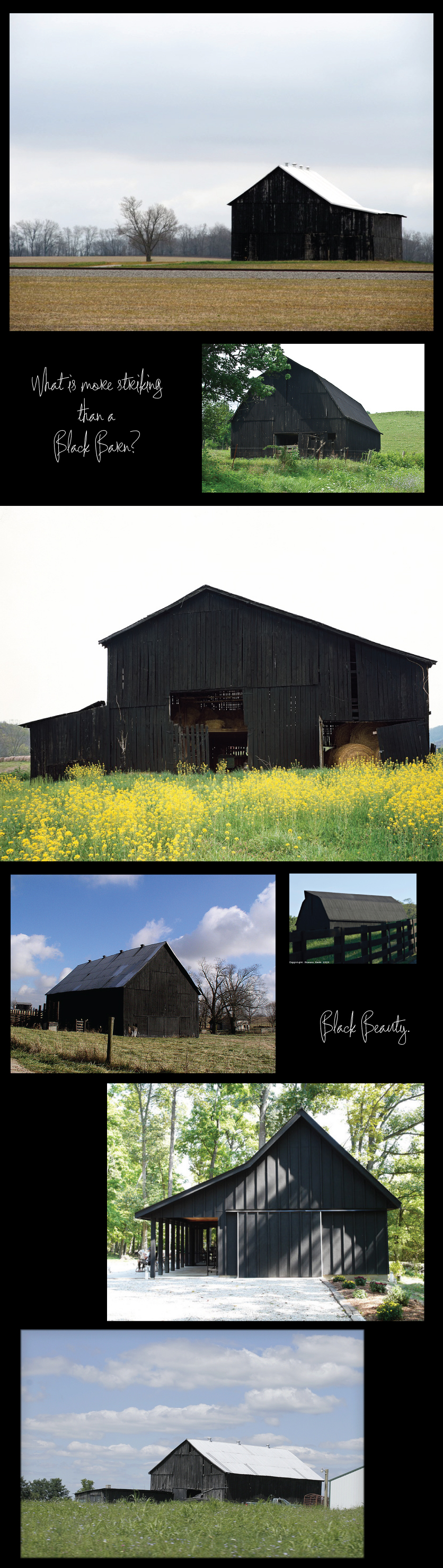 Black-Barn-Beauty