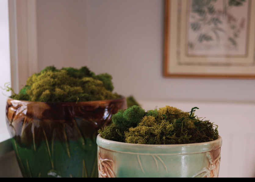 Perserved-Moss-in-Vintage-Pottery