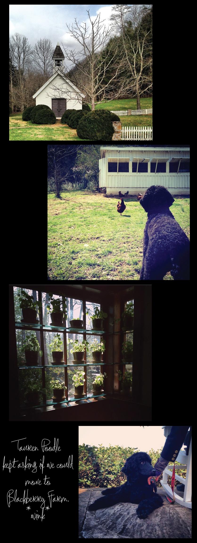Blackberry-Farm-Chapel-Chicken-Coop-Veranda