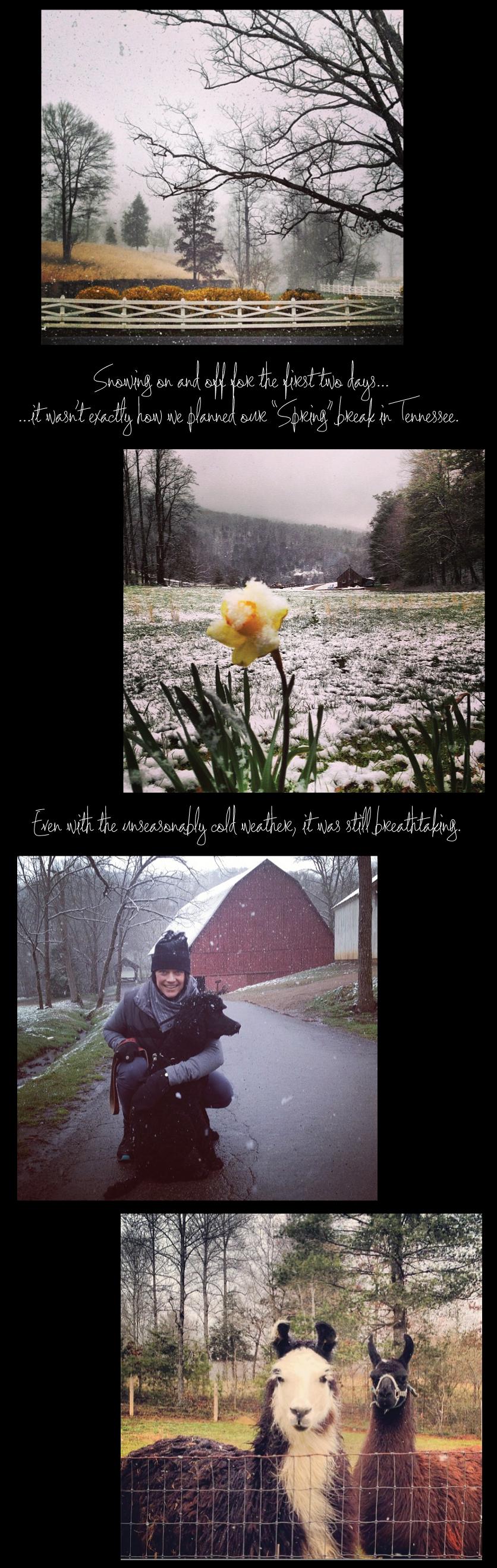 Blackberry-Farm-in-the-Snow