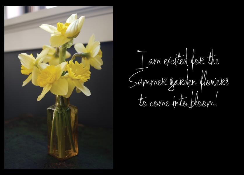 Spring-flowers-in-the-garden