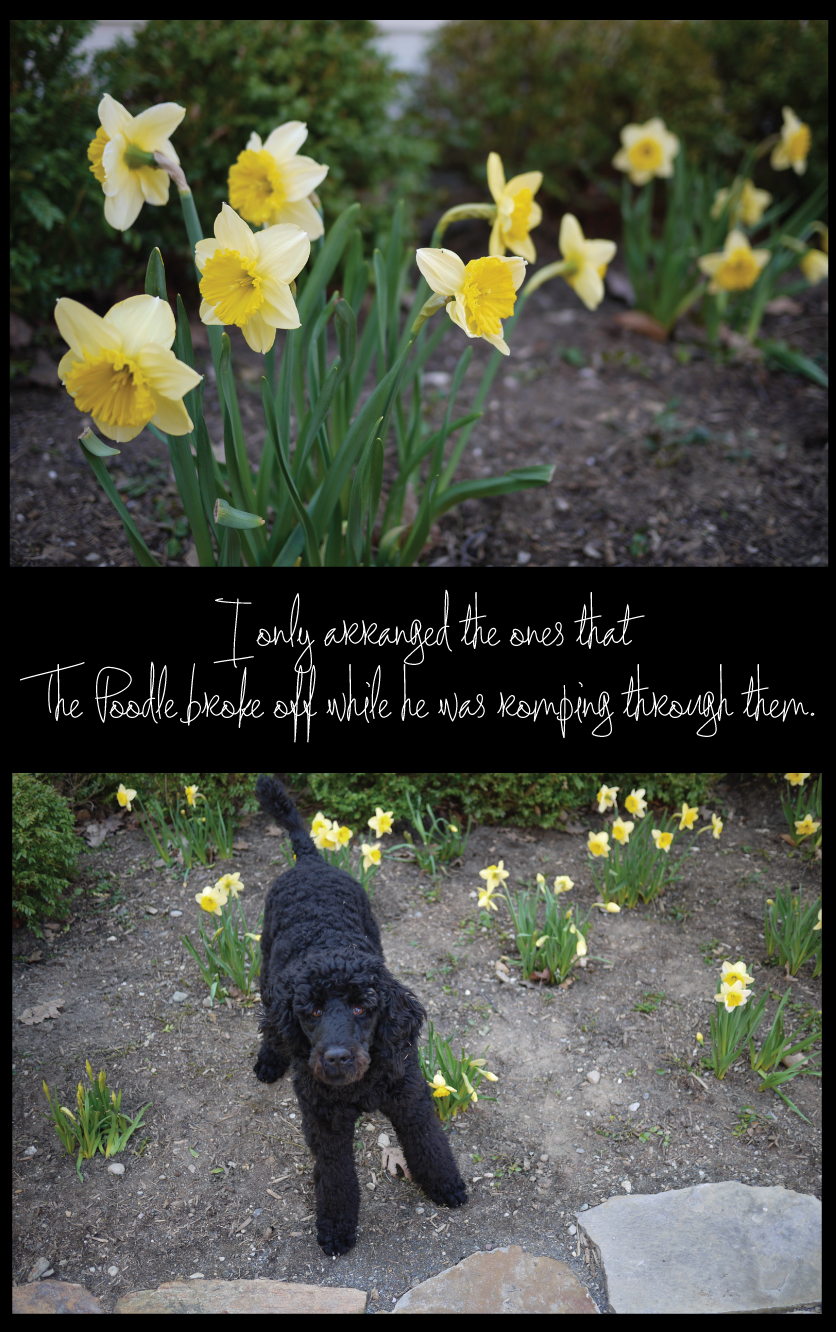 please-dont-eat-the-daffodils