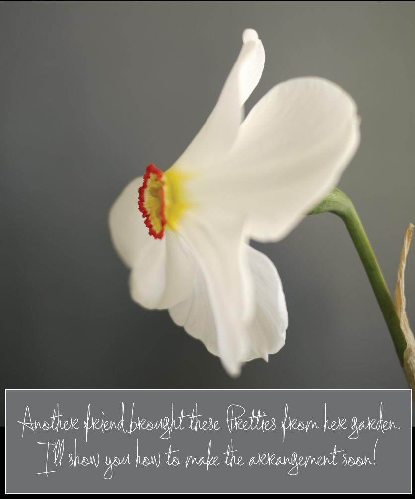 Phesants-Eye-Narcissus