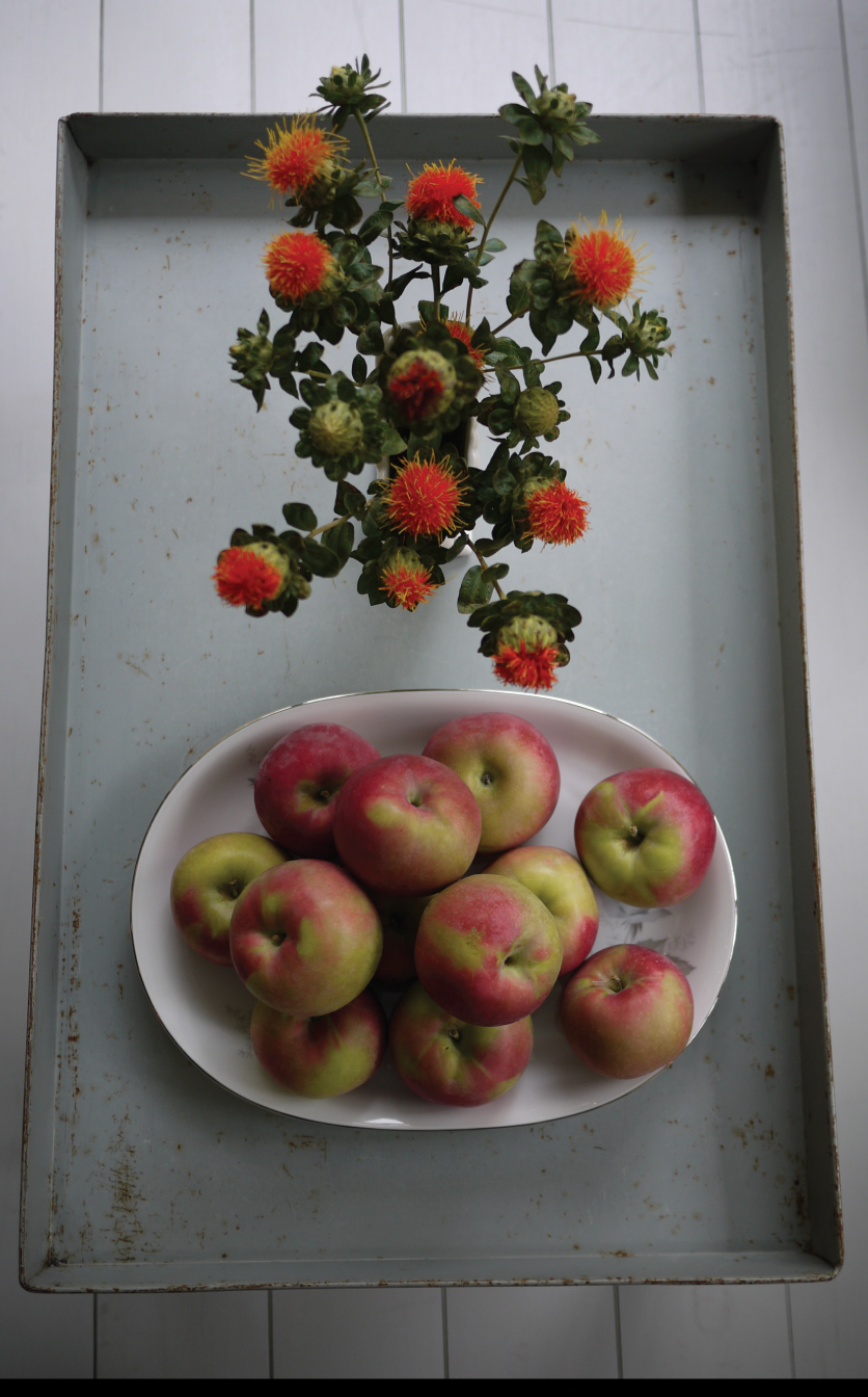 Safflowers-and-Apples-on-the-Screened-in-Porch