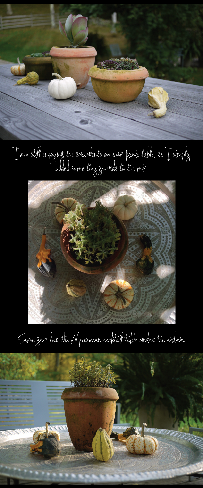 succulents-and-gourds