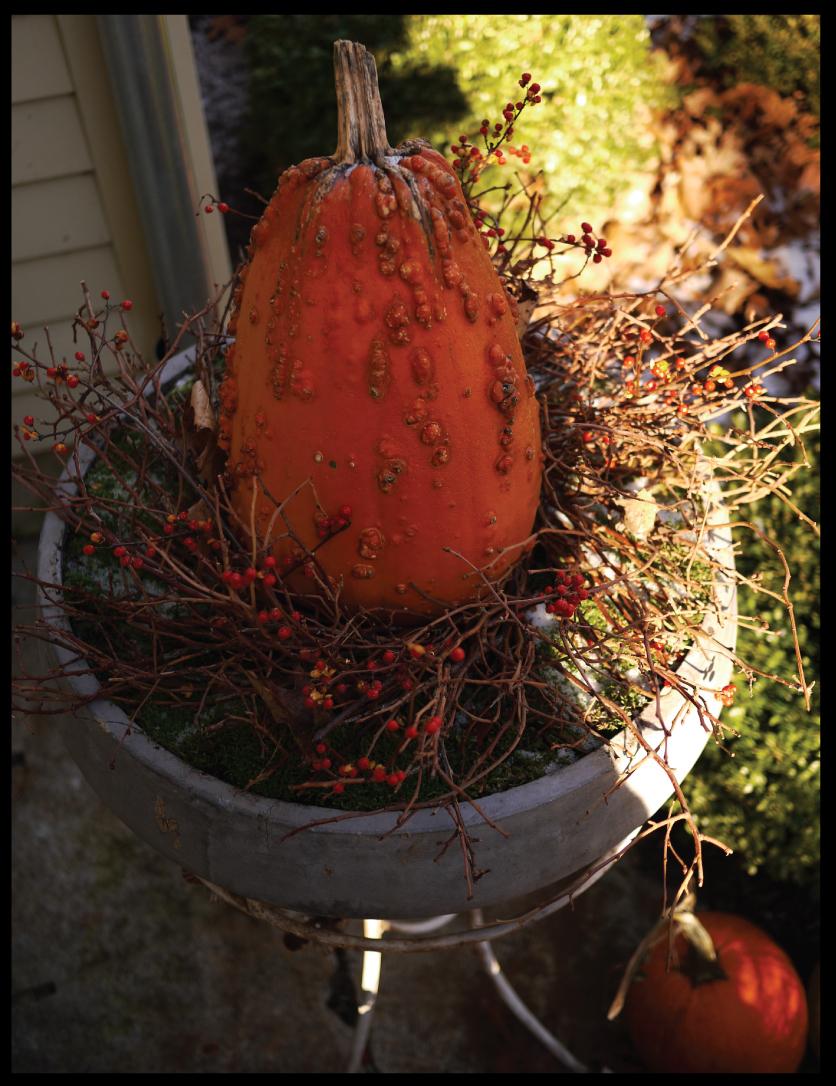 Bittersweet-vine-in-a-twig-wreath