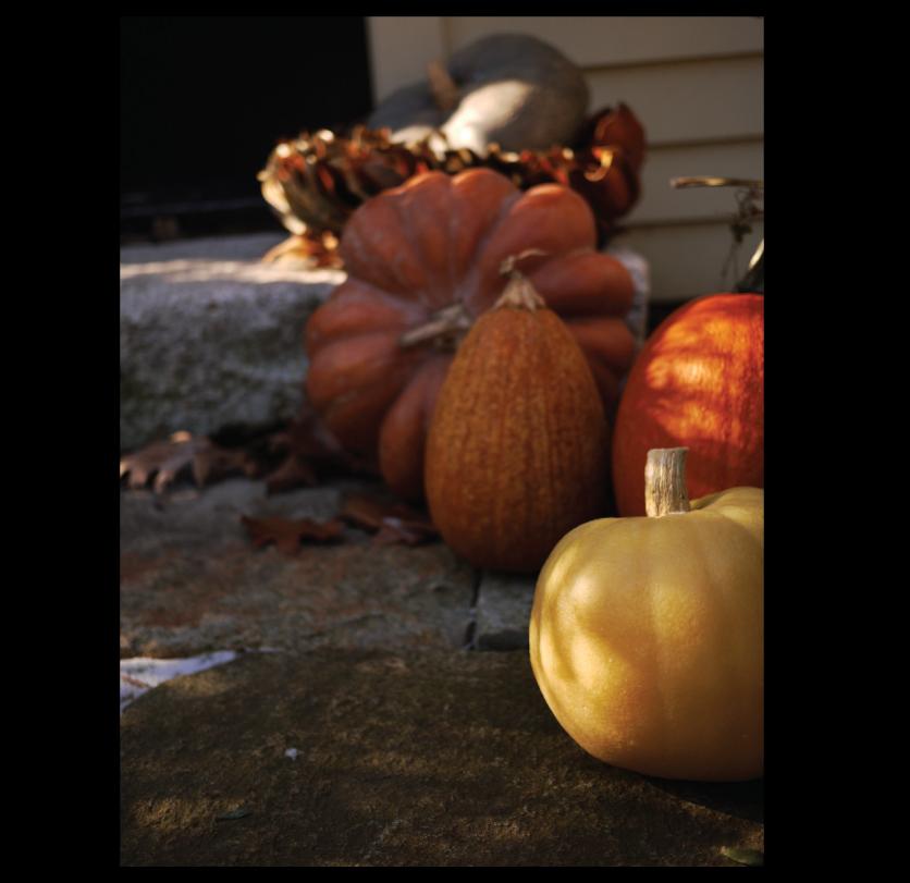 frozen-pumpkins-at-our-doorstep