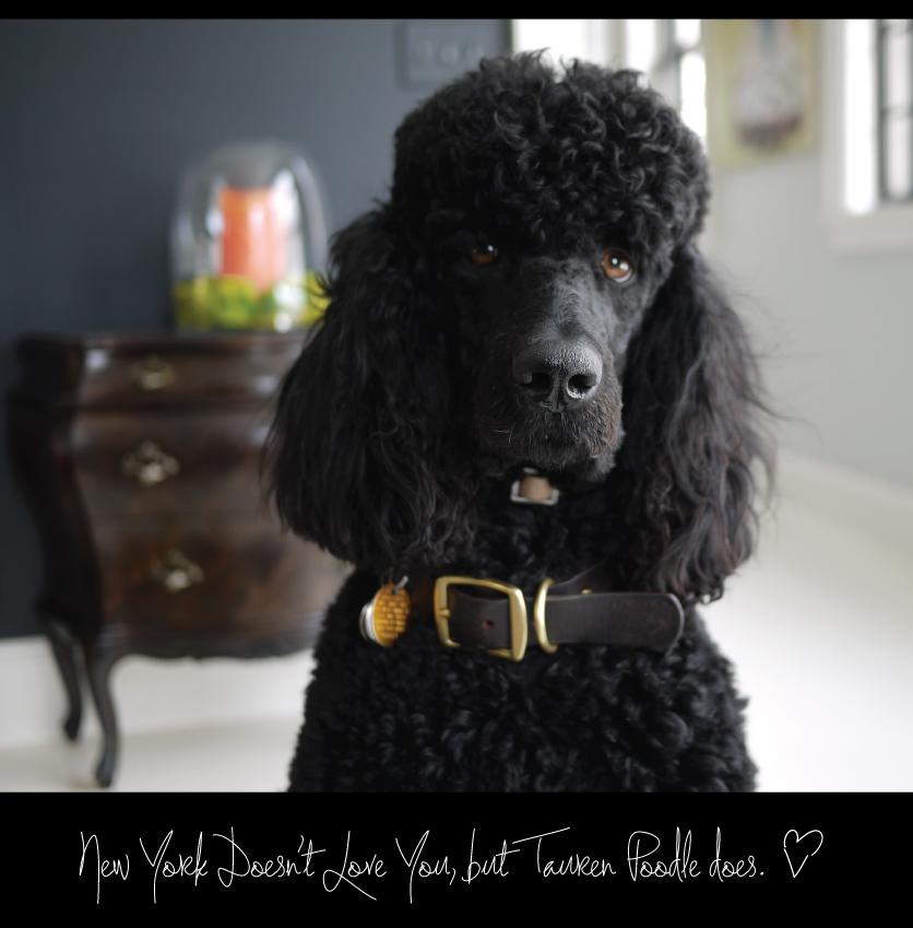 Tauren-Poodle-Loves-You