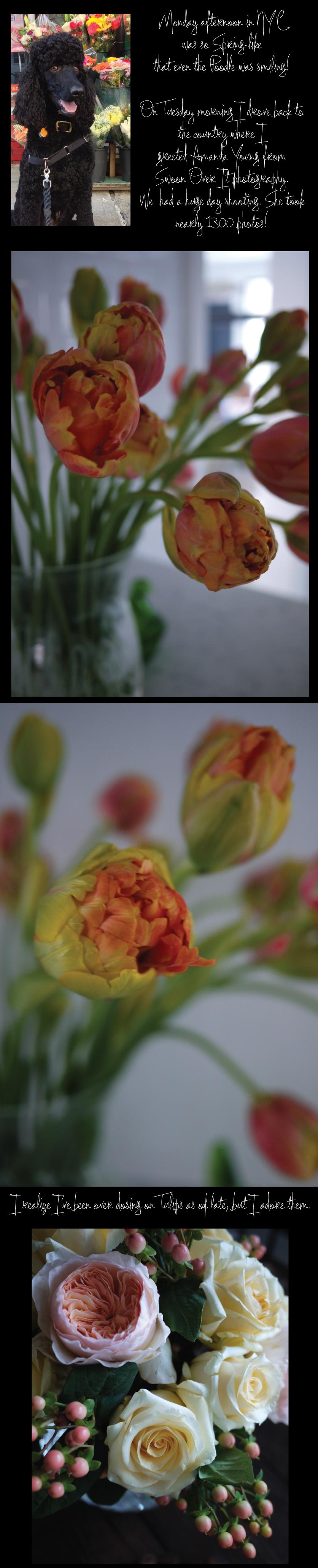 Happy-Poodle-Tulips-Juliet-Roses-Creme-De-La-Creme-Roses