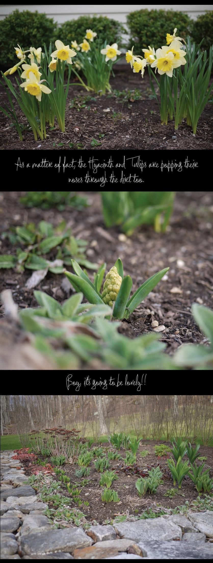 Spring-Flowers-Daffodils-Hyacinth-Tulips