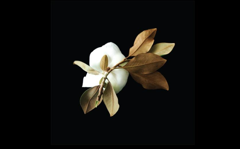 Magnolia-Wall-Print