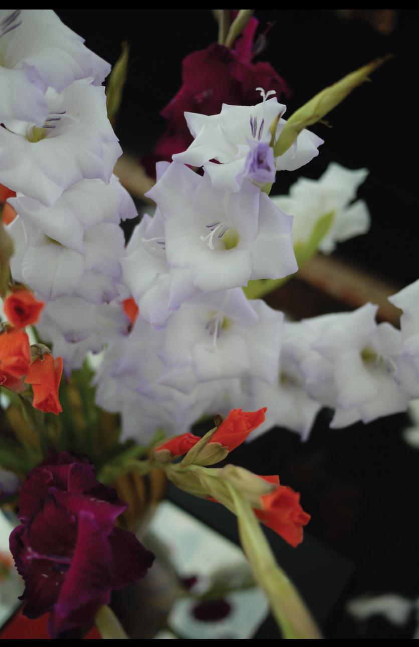 Beautiful-Gladiolus