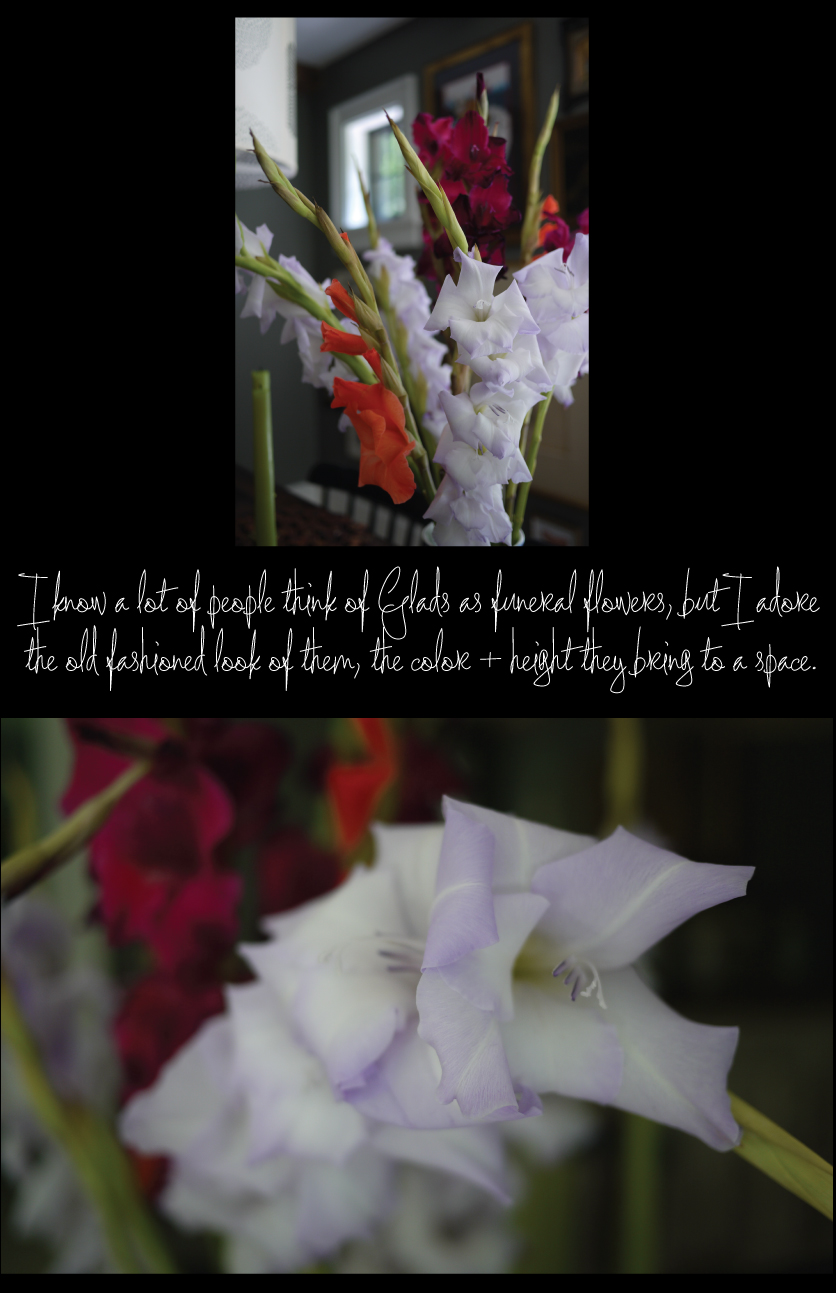 Gladiolus-bring-color-to-the-Dining-Room