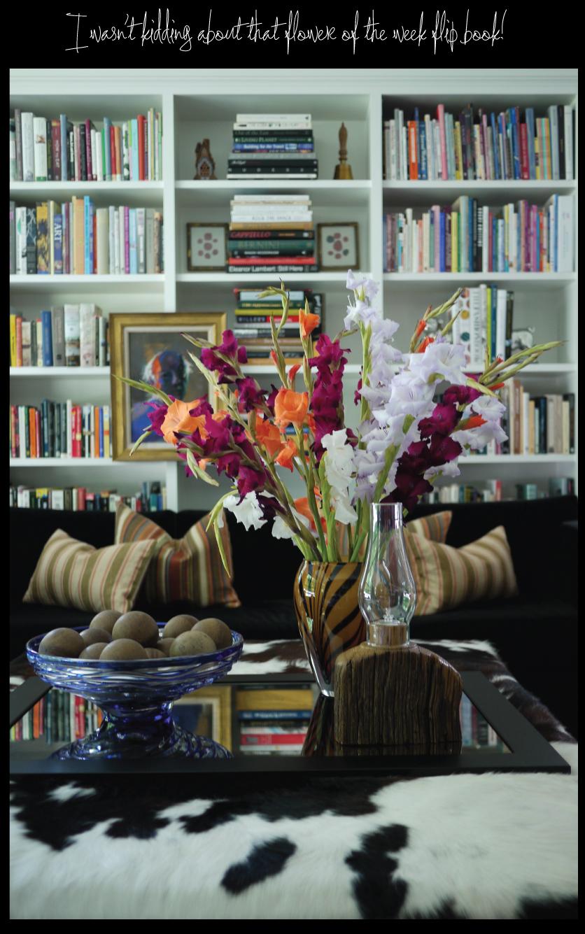 flower-of-the-week-flip-book