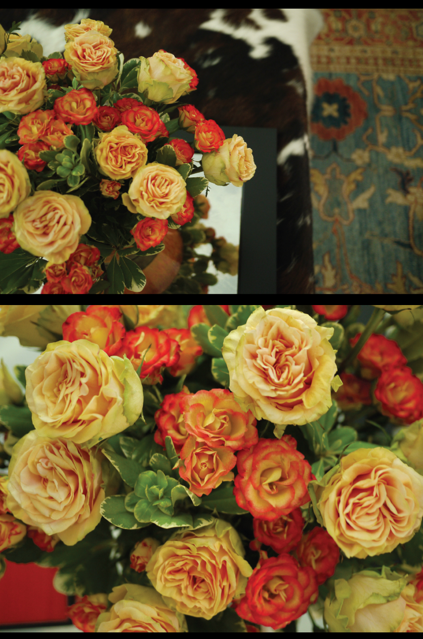 roses-in-the-library