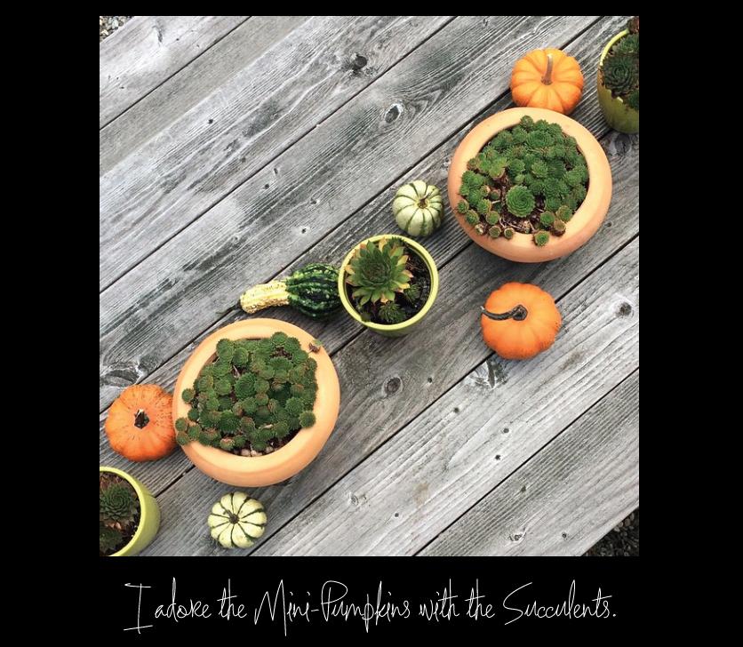 Mini-Pumpkins-and-Succulents