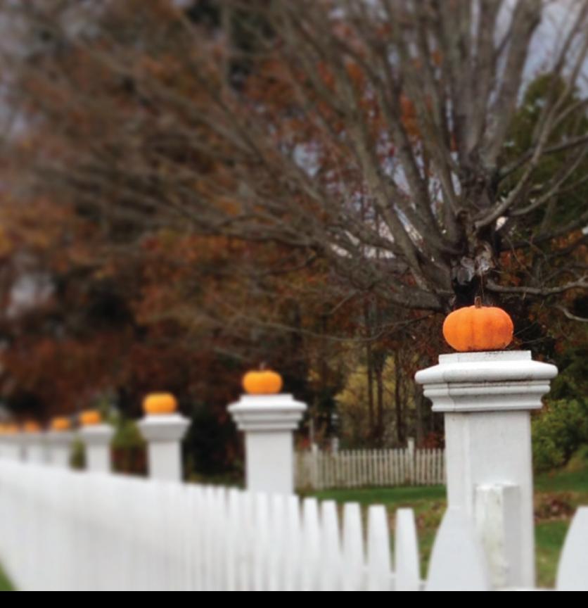 mini-pumpkins-on-fence-posts