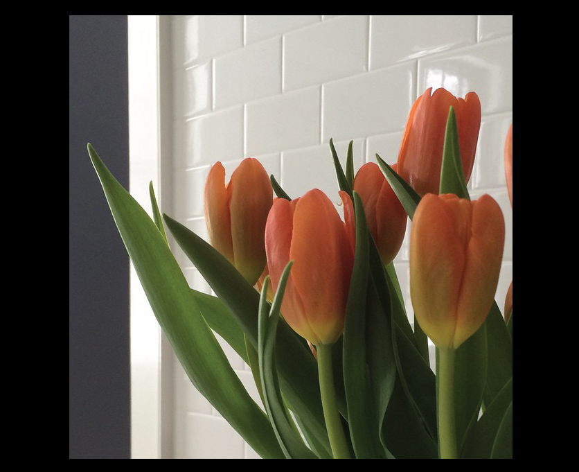 Tulips-in-the-Kitchen