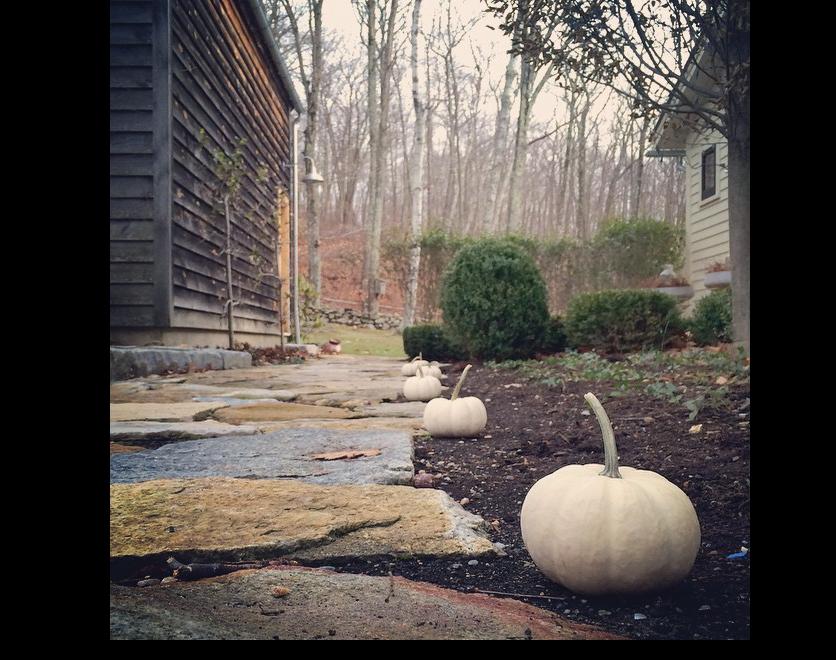 White-Pumpkins-along-the-Field-Stone-Walk