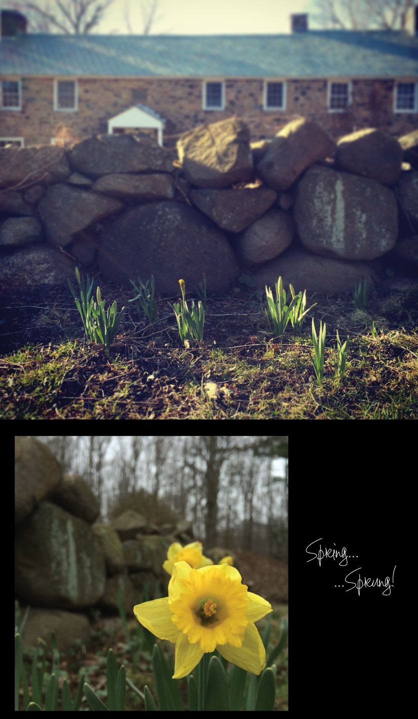 Spring-Sprung-in-the-Palisades