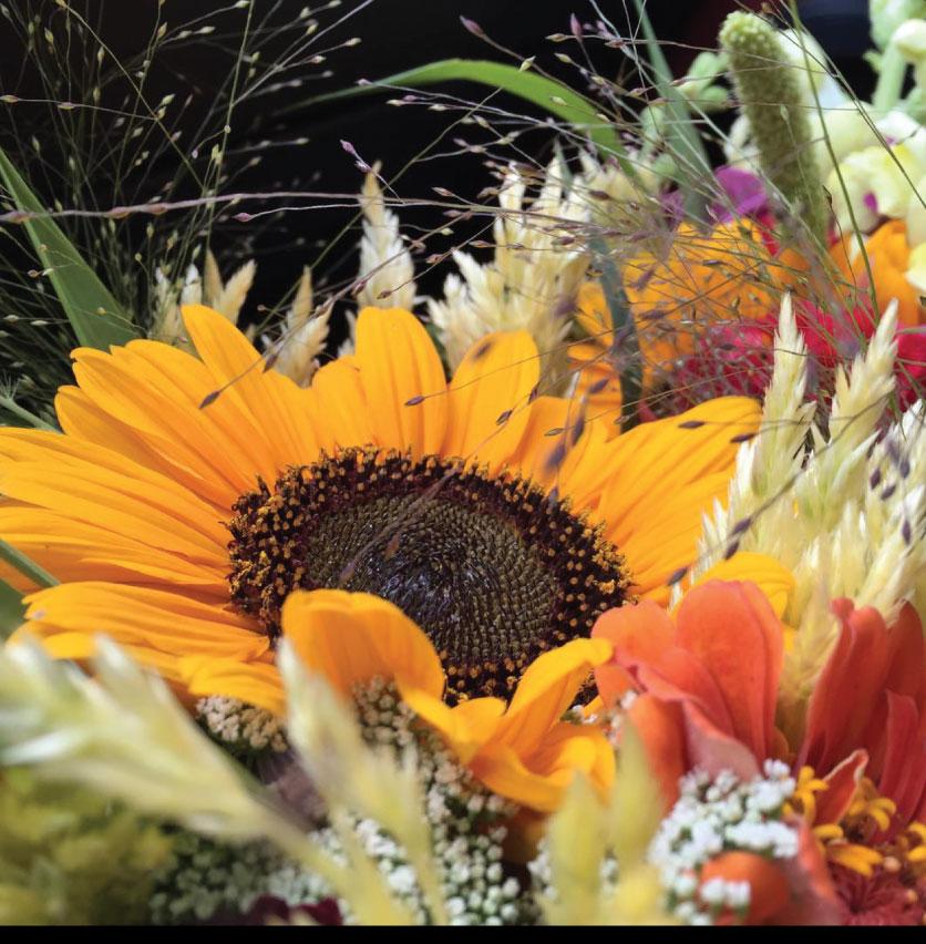 Sol-Flower-Farm